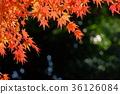 단풍 나무 프레임 5 36126084