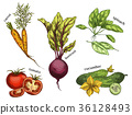 Sketches for carrot and tomato, cucumber, beetroot 36128493