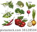 Sketch of artichoke and chilli pepper, peas, beans 36128504