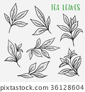 Sketches of green or black tea sprout with leaves 36128604