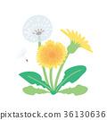 春天 春 植物 36130636