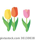 植物 植物學 植物的 36130638