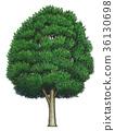 식물, 수목, 나무 36130698