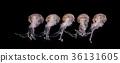 jellyfish isolated on black background illuminated 36131605