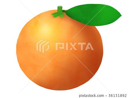 mikan, satsuma mandarin orange, fruit 36131892