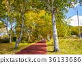 ทัศนียภาพ,ภูมิทัศน์,ธรรมชาติ 36133686