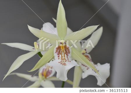 Mirtasia Aztec (Ever Glades Green) 36135513