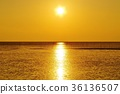 ariake sea, breeding, cultivation 36136507