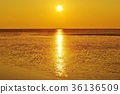 ariake sea, breeding, cultivation 36136509