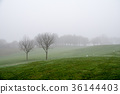 안개 낀 골프장 가지 나무 라든지 맑은 숲과 페어 웨이를 산책하는 흰 비둘기 36144403