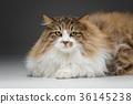 closeup of no breed cat 36145238