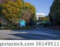 japan, tokyo, shinjuku 36149511