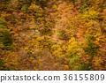 谷景观,深秋的山脉。 36155809