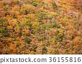 谷景观,深秋的山脉。 36155816