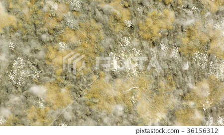Close up of bread has a fungus. 36156312