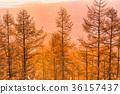พระอาทิตย์ตก,ธรรมชาติ,ทัศนียภาพ 36157437