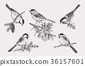 Set of birds. 36157601