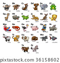 alphabet animal animals 36158602