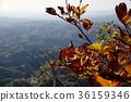 ธรรมชาติ,ฤดูใบไม้ร่วง,ต้นเมเปิล 36159346