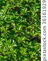 잎, 이파리, 잎사귀 36161929