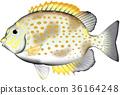 물고기, 벡터, 산호초 36164248