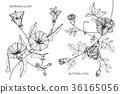 Flower drawing illustration.  36165056