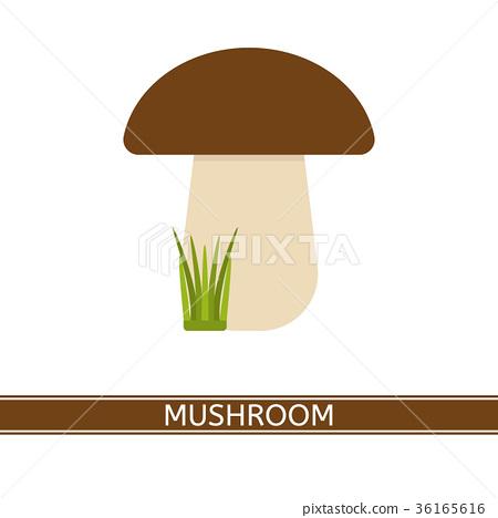 Mushroom Vector Isolated 36165616
