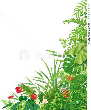 Side Corner  Border  with Tropical  Plants 36166366
