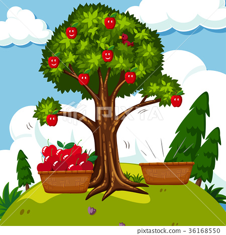 Red apple tree in the field 36168550