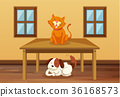 Cat and dog in the room 36168573