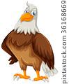 Wild eagle on white background 36168669