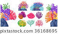 Different types of coral reef 36168695