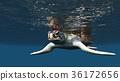 海龜 烏龜 海 36172656