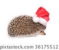 Hedgehog wearing red santa hat. 36175512