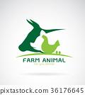 farm, animal, vector 36176645