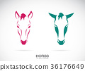 Vector of a horse head design, Horse Logo. W 36176649