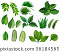 Summer, spring leaves set. Green flat icon. vector 36184565