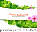 tropical, leaves, background 36184576