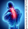 Neck painful - cervical spine, 3D illustration. 36187556