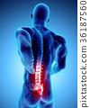 3D Illustration of sacral spine painful. 36187560