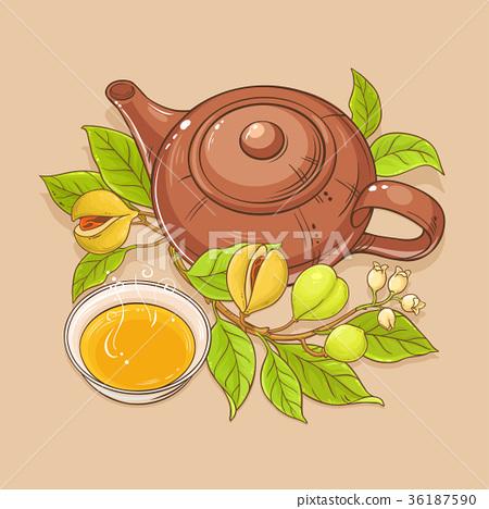 nutmeg tea illustration 36187590