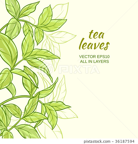 tea leaves background 36187594