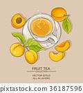 apricot, vector, tea 36187596