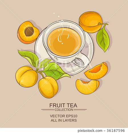apricot tea illustration 36187596