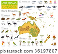Australia and Oceania flora and fauna map 36197807