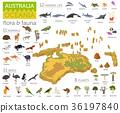 Isometric  Australia and Oceania flora and fauna  36197840