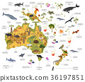 Australia and Oceania flora and fauna map 36197851