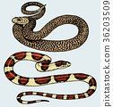 Viper snake. serpent cobra and python, anaconda or 36203509