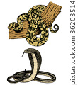 Viper snake. serpent cobra and python, anaconda or 36203514