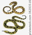 Viper snake. serpent cobra and python, anaconda or 36203516